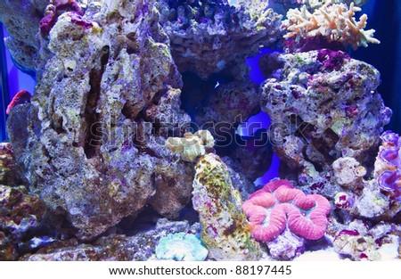 Salt water aquarium with corrals