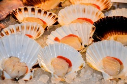 salt-water bivalve molluscs are to sell in the local market