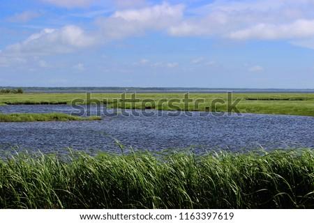 salt water marsh in Nova Scotia