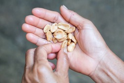 salted peanuts in hand on women hand.