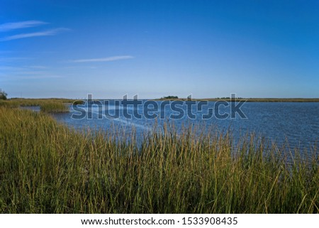 Saltmarsh along the Delaware coast in USA in late afternoon sun. Also known as a coastal salt marsh or tidal marsh it is located between land and brackish water that is regularly flooded by the tides. #1533908435