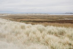 Saltmarsh and sand dunes on overcast winter day