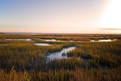 Saltmarsh on the Virginia coast in USA in the golden sun at sunset.  Known as a coastal salt marsh or tidal marsh it is located between land and brackish water that is regularly flooded by the tides.