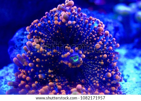 Saltwater Aquarium Fish and Coral #1082171957