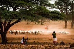 Samburu warriors guarding the livestock