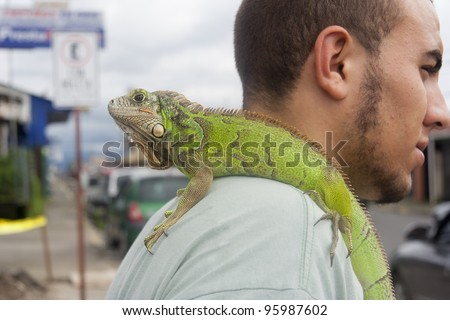 SAN JOSE, COSTA RICA - AUGUST 31: Man carrying green iguana on his shoulder in San Jose, Costa Rica on August 31, 2008. Iguanas are large lizards native to South and Central America.