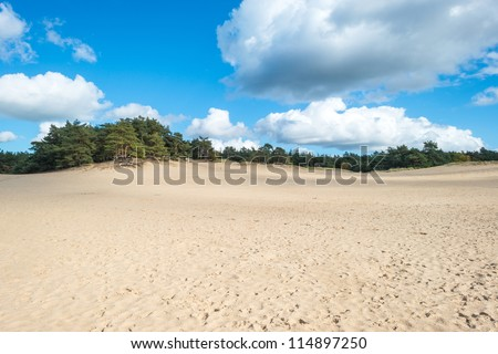 Sand and pines at fall