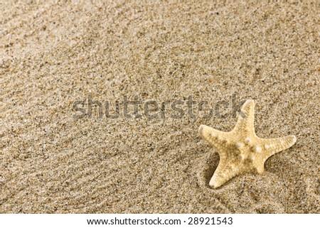 sand and starfish