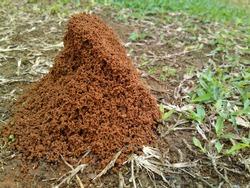 Sand anthill