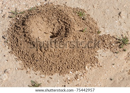 Sand anthill in the desert