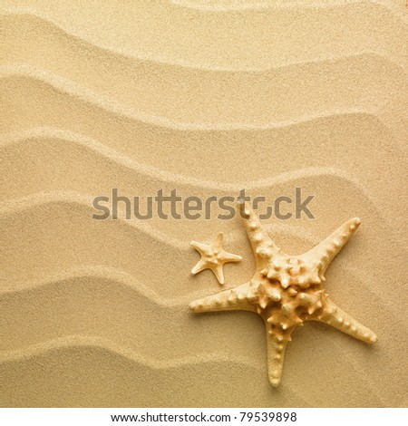 sand as background and starfish