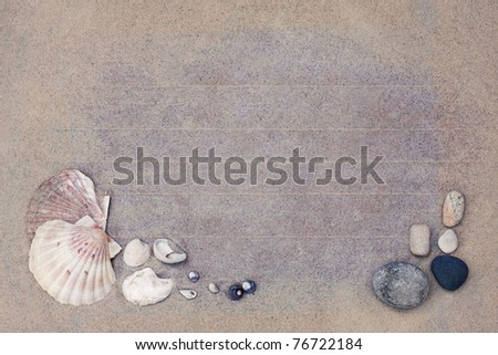 sand background with mussels