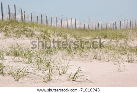 sand bar and coastal plants