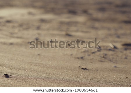 sand beach background and texture. High quality photo Stock foto ©