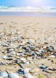 sand beach background seashell sea star holiday shells on beach