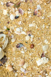 sand beach background seashells shells on beach holiday