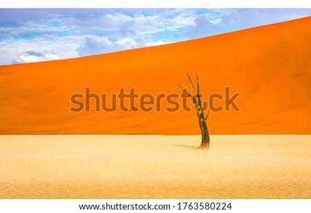 Sand desert dunes dead dry tree. Orange desert sand dunes