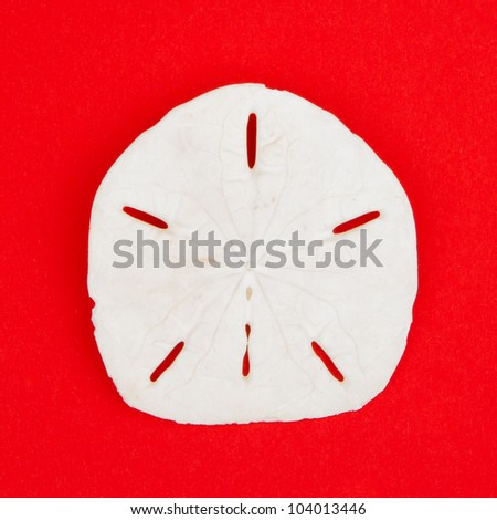 Sand Dollar Sea Shell Isolated on Red Background