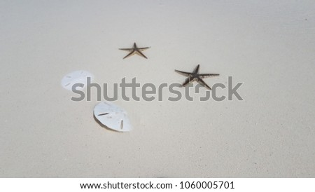 Sand Dollars & Sea Stars on the Beach Sandbar in Exuma, Bahamas #1060005701