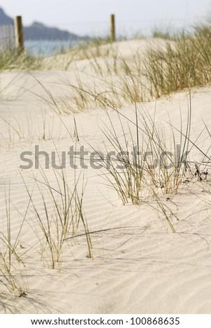 Sand dune scene. Daymer Bay, Cornwall, UK.