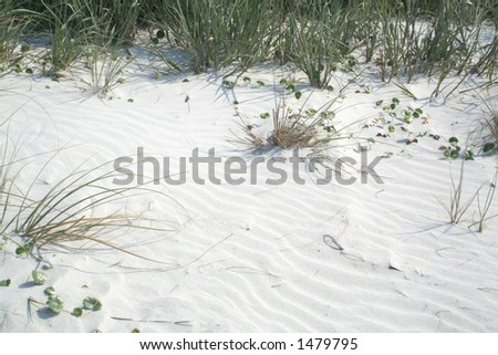 Sand Dune with Sea Oats and grasses