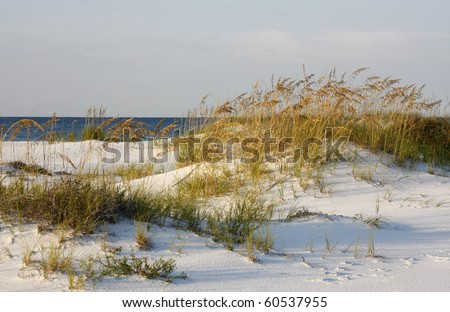 Sand Dunes and Sea Oats on the Gulf of Mexico