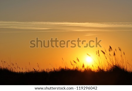 Sand dunes and sea oats silhouette in a morning sunrise