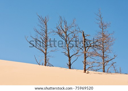 sand dunes eating up forest