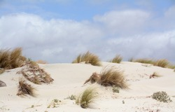 Sand dunes in Sardinia behind the beach. Bushes of Mediterranean plants and a wild atmosphere.