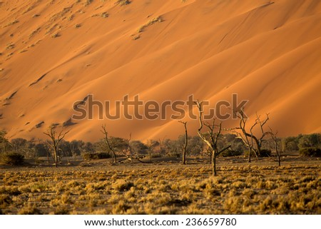 Sand Dunes in Sossusvlei, Namib Naukluft National Park #236659780