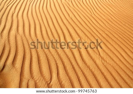 Sand dunes in the Al Ain desert, United Arab Emirates