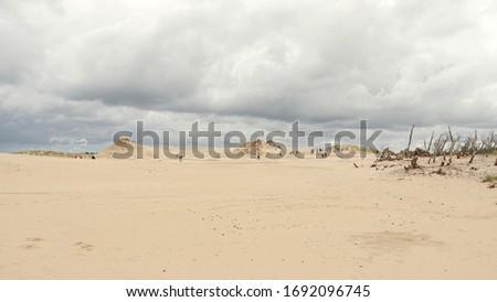 Sand dunes. Location: Europe, Poland, Leba, Slowinski park narodowy Zdjęcia stock ©