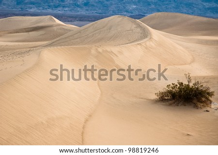 Sand Dunes Near Stove Pipe Wells, Death Valley National Park, USA.