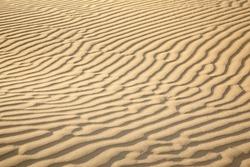 Sand dunes of desert Thar  in Rajasthan, India