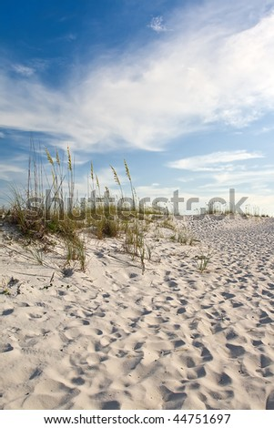 Sand dunes on the coast with grassland