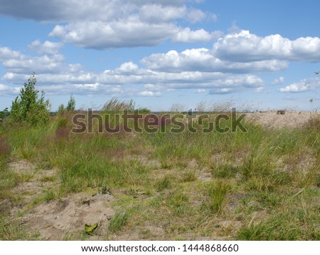 sand dunes overgrown with grass landscape with low clouds windy weather