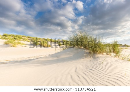 Sand dunes with grass under a blue sky with clouds #310734521