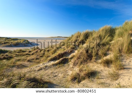 Sand dunes with helmet grass near the sea