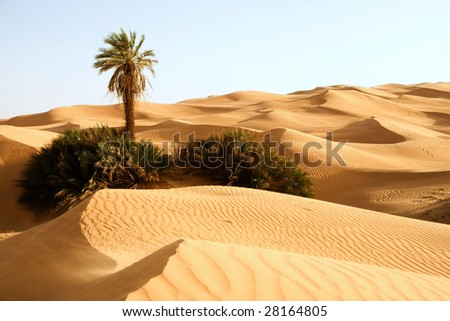 Stock Photo Sand dunes with one palm tree; Awbari, Libya