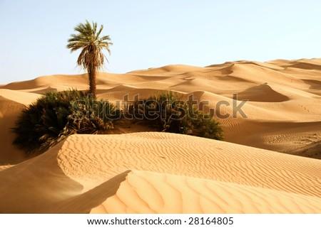 Stock Photo Sand dunes with one palm tree; Awbari, Libya