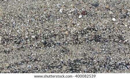 sand fossil shell on the beach, Phuket, Thailand #400082539