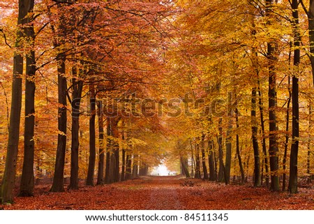 Sand lane with trees on a sunny day in autumn