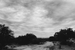 sand road sky and vegetation