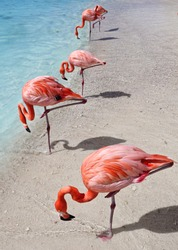 Sand, sea and flamingos in Aruba, Caribbean