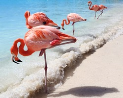 Sand, sea and flamingos in Aruba, Caribbean