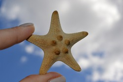 sand starfish from the ocean on a wooden color in summer