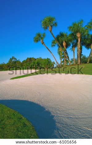 sand trap and cluster of palm trees on golf course