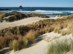 Sandfly bay near Dunedin, New Zealand
