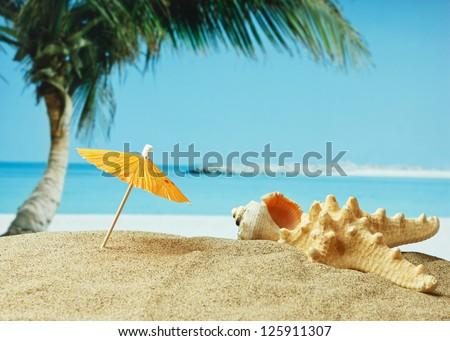 sandy beach on the tropical coast