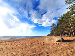 Sandy beach with pine forest on the shores of the Gulf of Finland, Baltic Sea. Blue sky, white clouds, pine trees and boulder - stone.